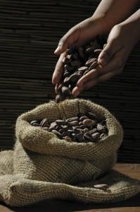 cocoa-beans-499970_1280